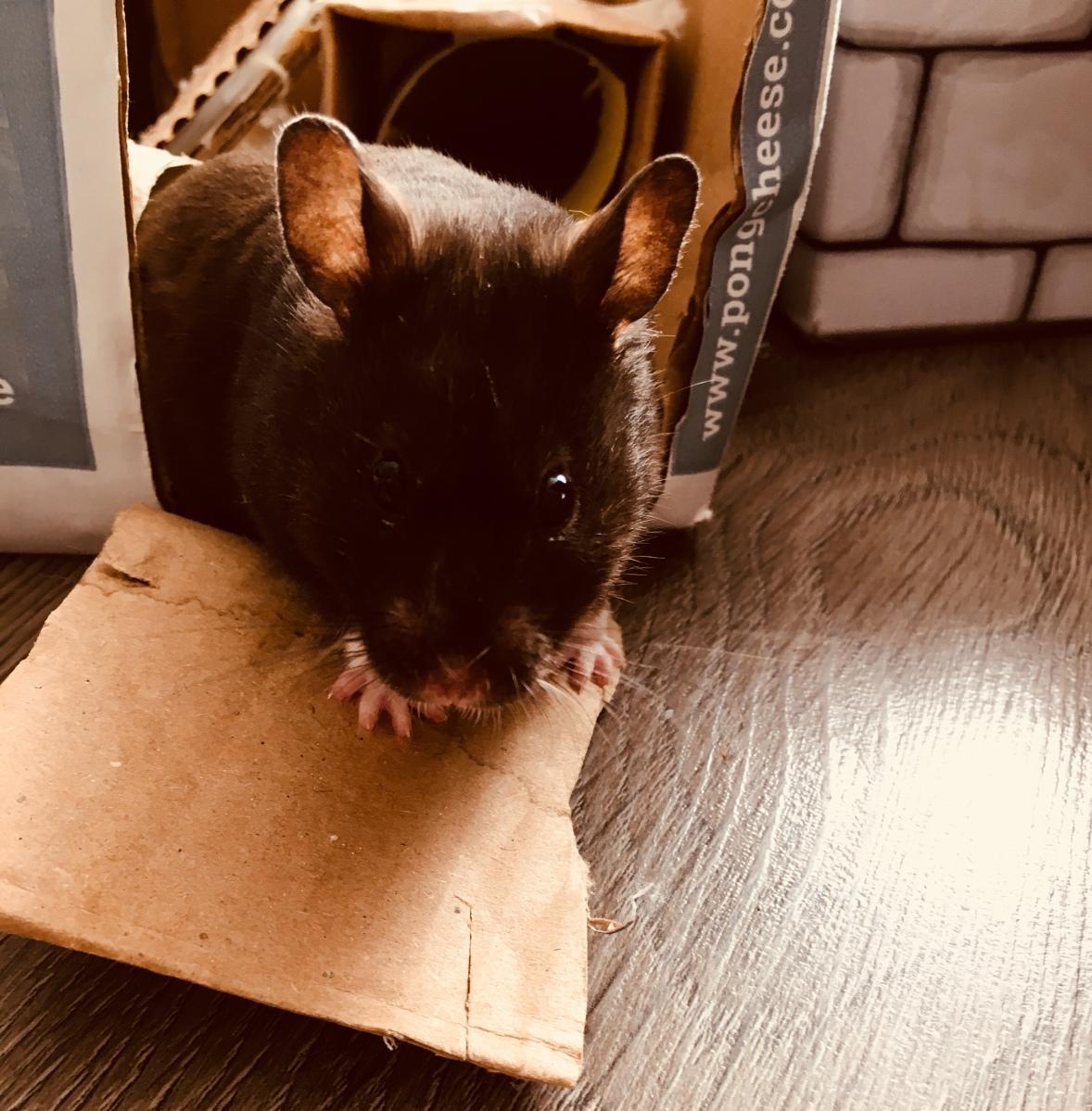Saturday Pet Takeaway